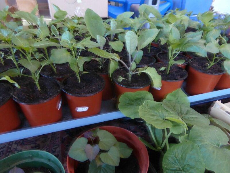 1-semis pots (6)