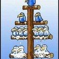 Hierarchie....chez les oiseaux bien sûr