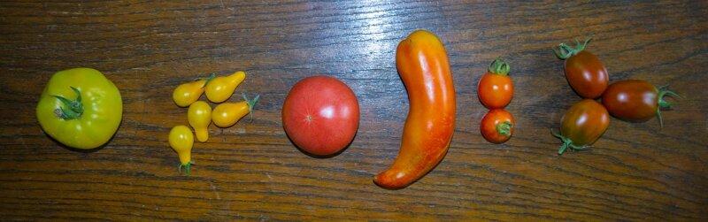 tomates20150722