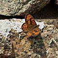 Carnet naturaliste #3
