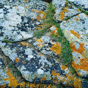 lychen et granit