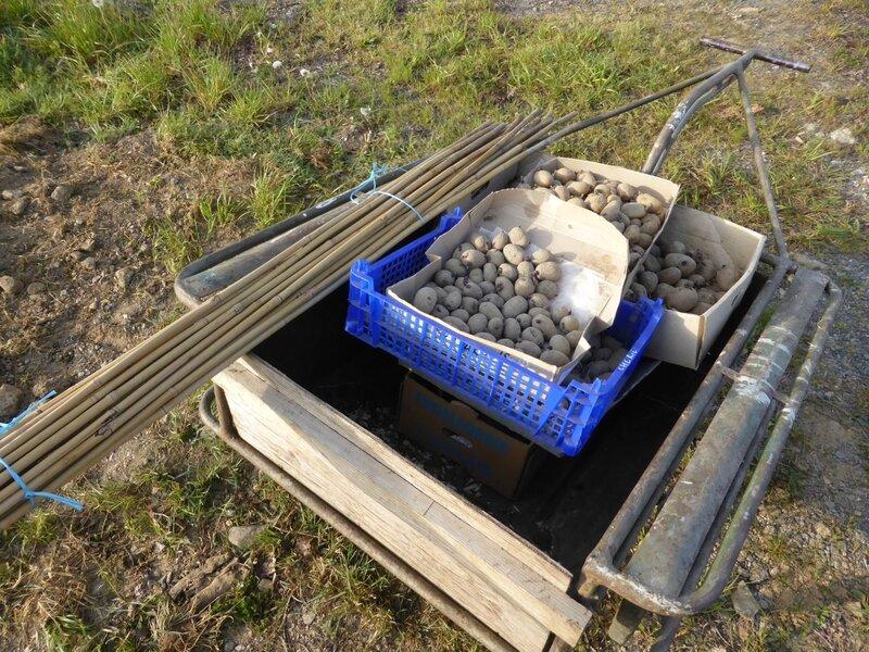 11-pommes de terre (11)