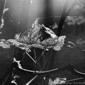 Octobre 2014 (noir et blanc)