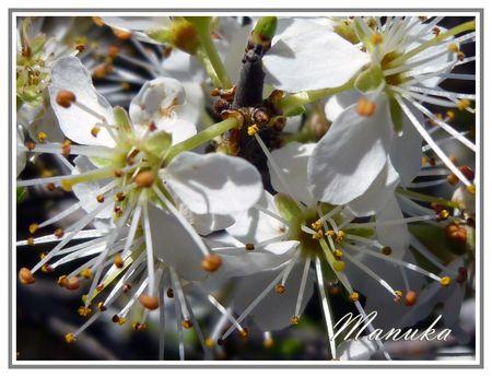 fleurs_printempsbis