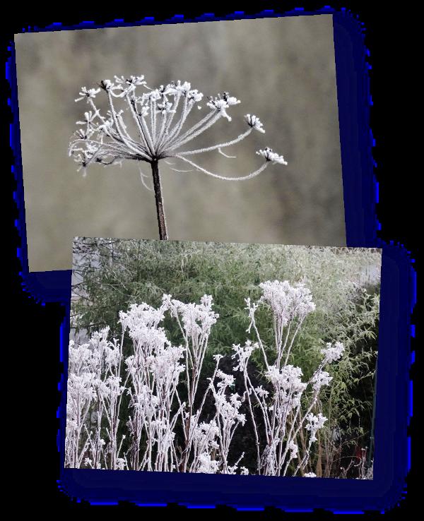 fleurs en filigranes