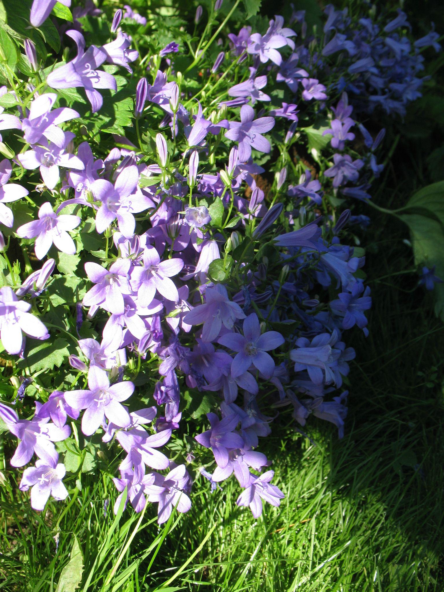 Fleurs mauves : fleurs de printemps - Brin et brindille : atelier saisonnier