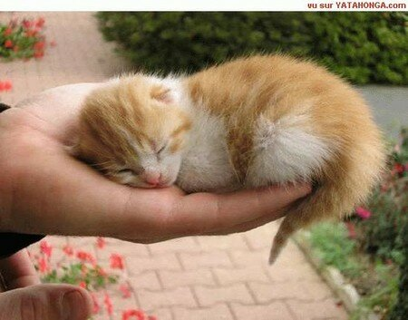 chat_animaux_13_chataignier_boupere_