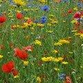 Fleurs des Villes - Lille
