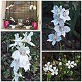 Fleurs du jardin (8)