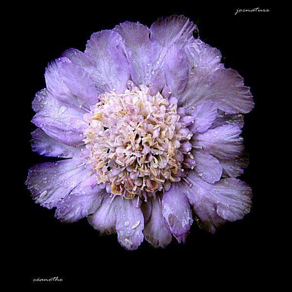 couleurs-de-fleurs22jpg