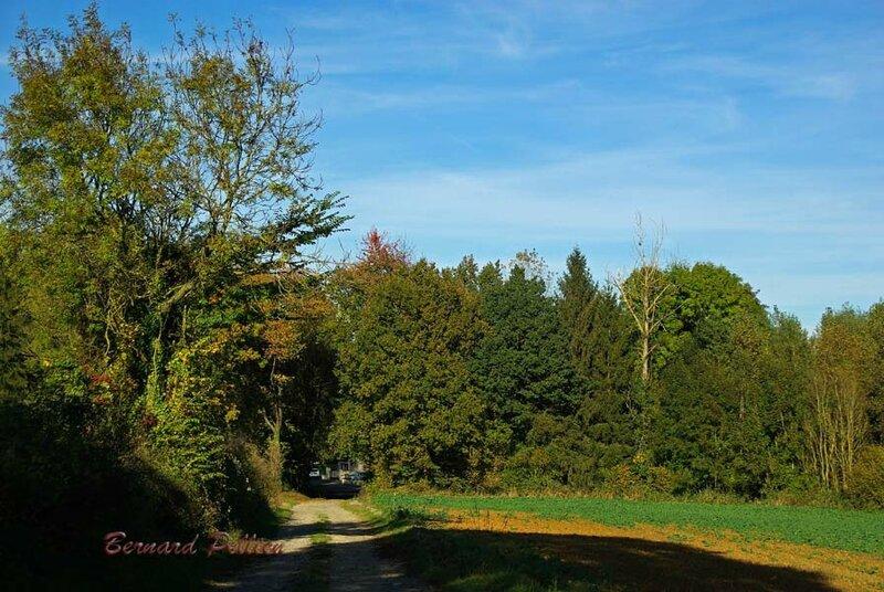 20161030_paysage_automne_20