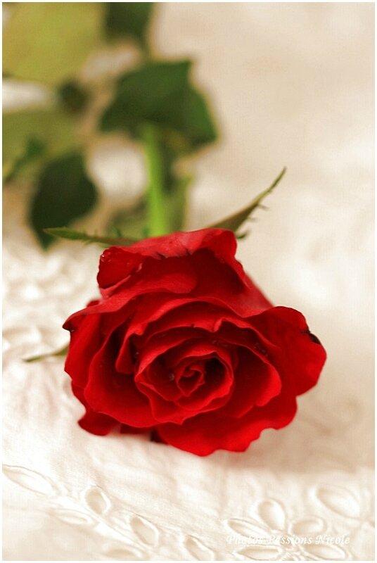 Demain c'est la Saint-Valentin.....Pensez à participer au grand concours Saint Valentin 2015 chez Nicole Passions....