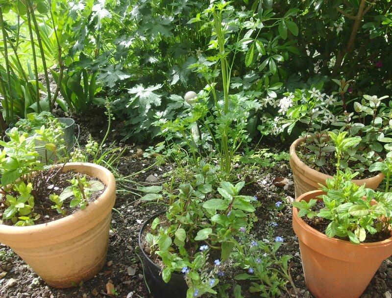 jardin-i