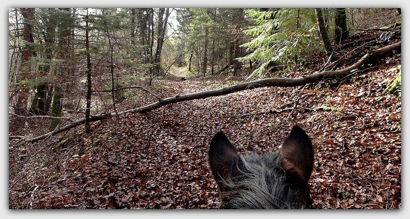 23 11 Balade cheval (5)