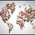 Image du jour - un monde de fleurs...