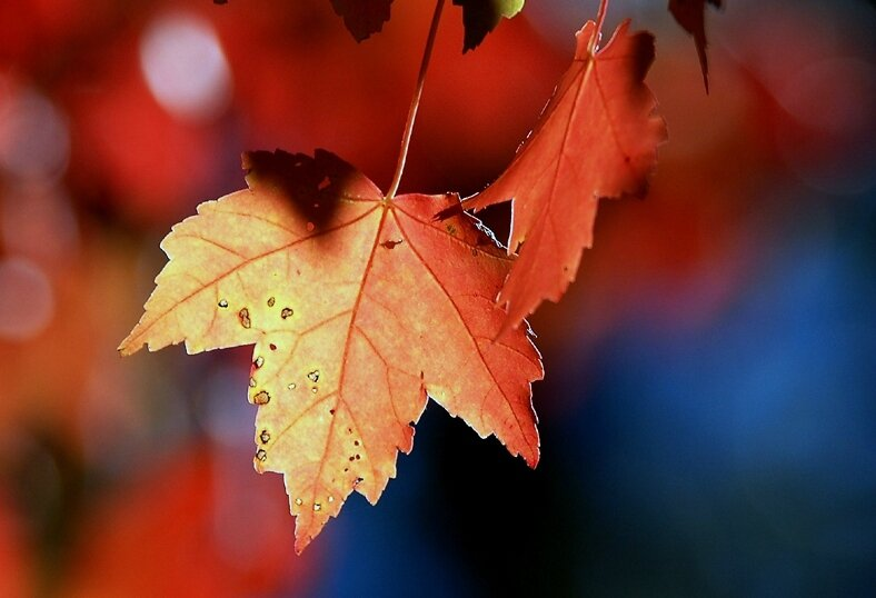 autumn_leaves_by_fishsauce-002