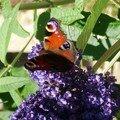 Arbre a papillons