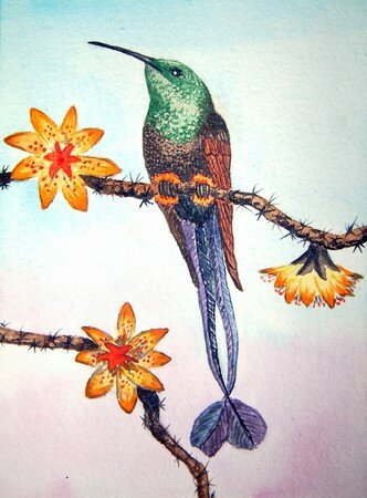 oiseau_mouche___raquettes_ou_colibri