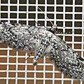 Eupithecia graphiticata