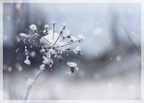 naturo hiver001