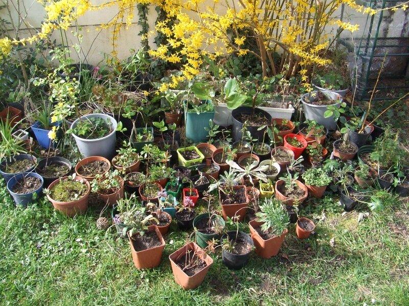 Le troc aux plantes de printemps les jardins partag s de for Jardin aux plantes