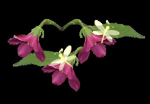 fleurs-libellules-temps-des-fc3a9es