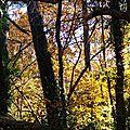 Feuillages automne 07121510