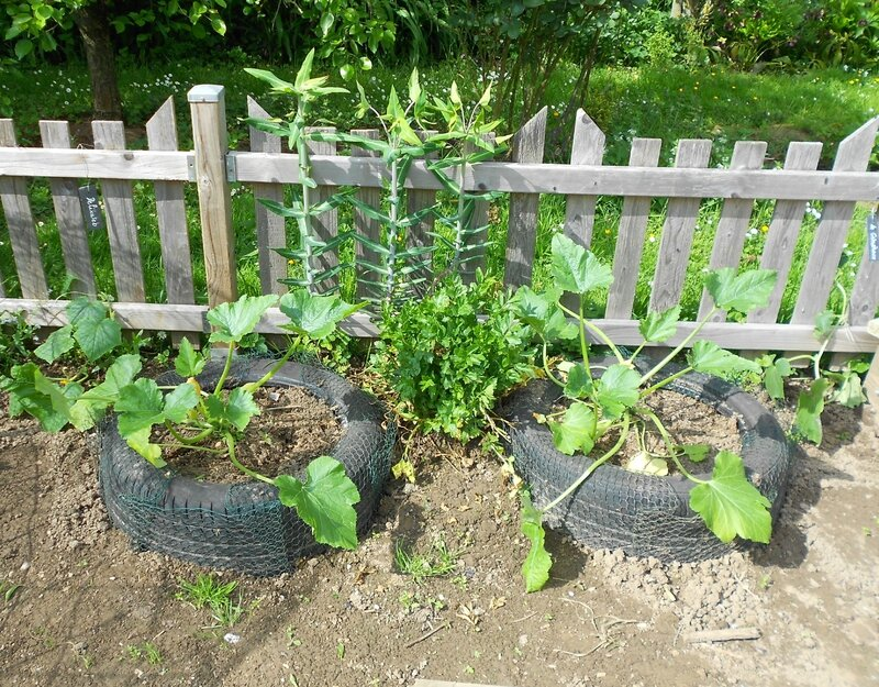 courgettes & taupees 001