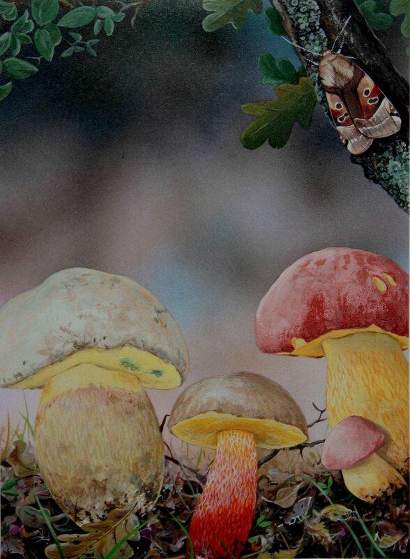Planche champignon 151 bis