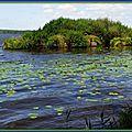 Lac 01091523