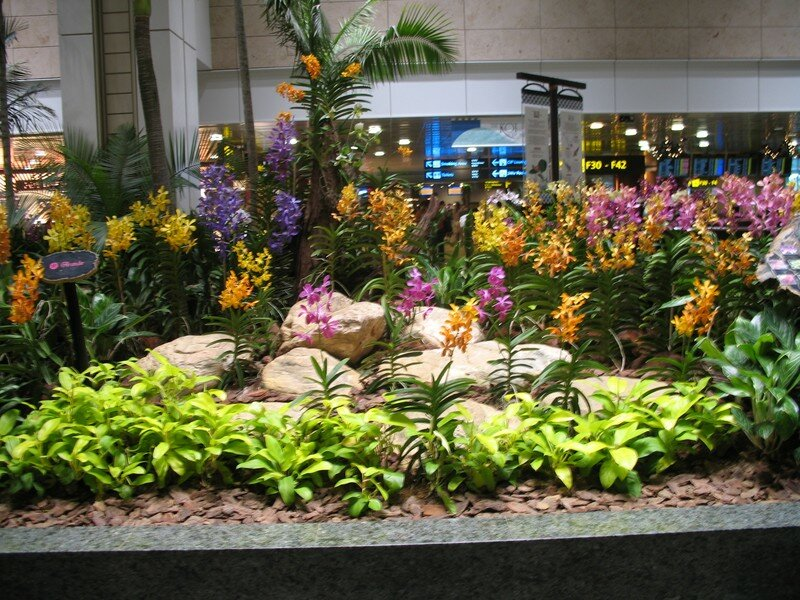 Aeroport de Singapour. Jardin d'orchidees - Photo de 01 ...