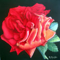 rose rouge meillan