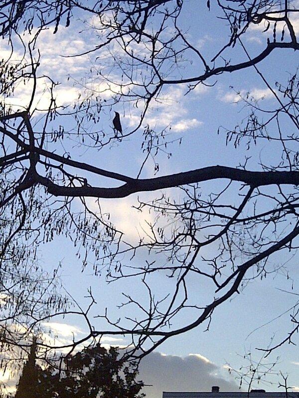 arbres (7)