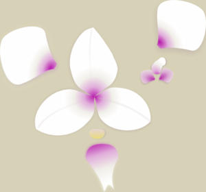orchid_pieces