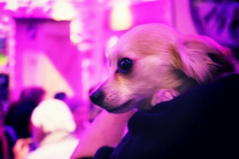 mini dog 2