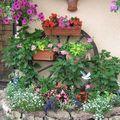 Notre maison fleurie