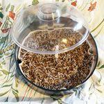 germoir alfalfa 2 jours