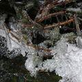 2009 01 25 La glace dans toute ses forme le long d'un ruisseau