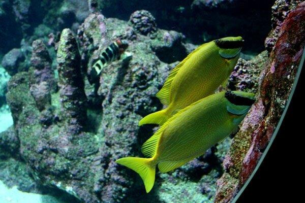 poisson-j