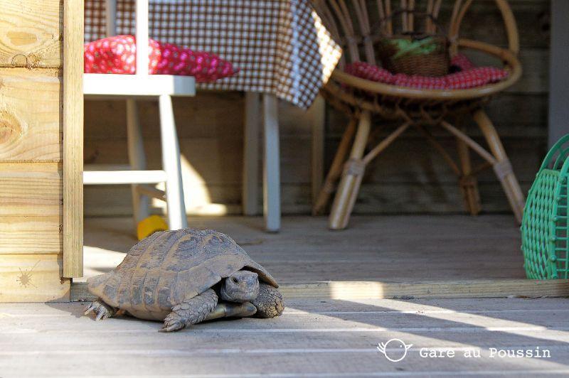 reveil de la tortue