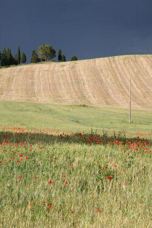 Toscane Juin 2013 - 06