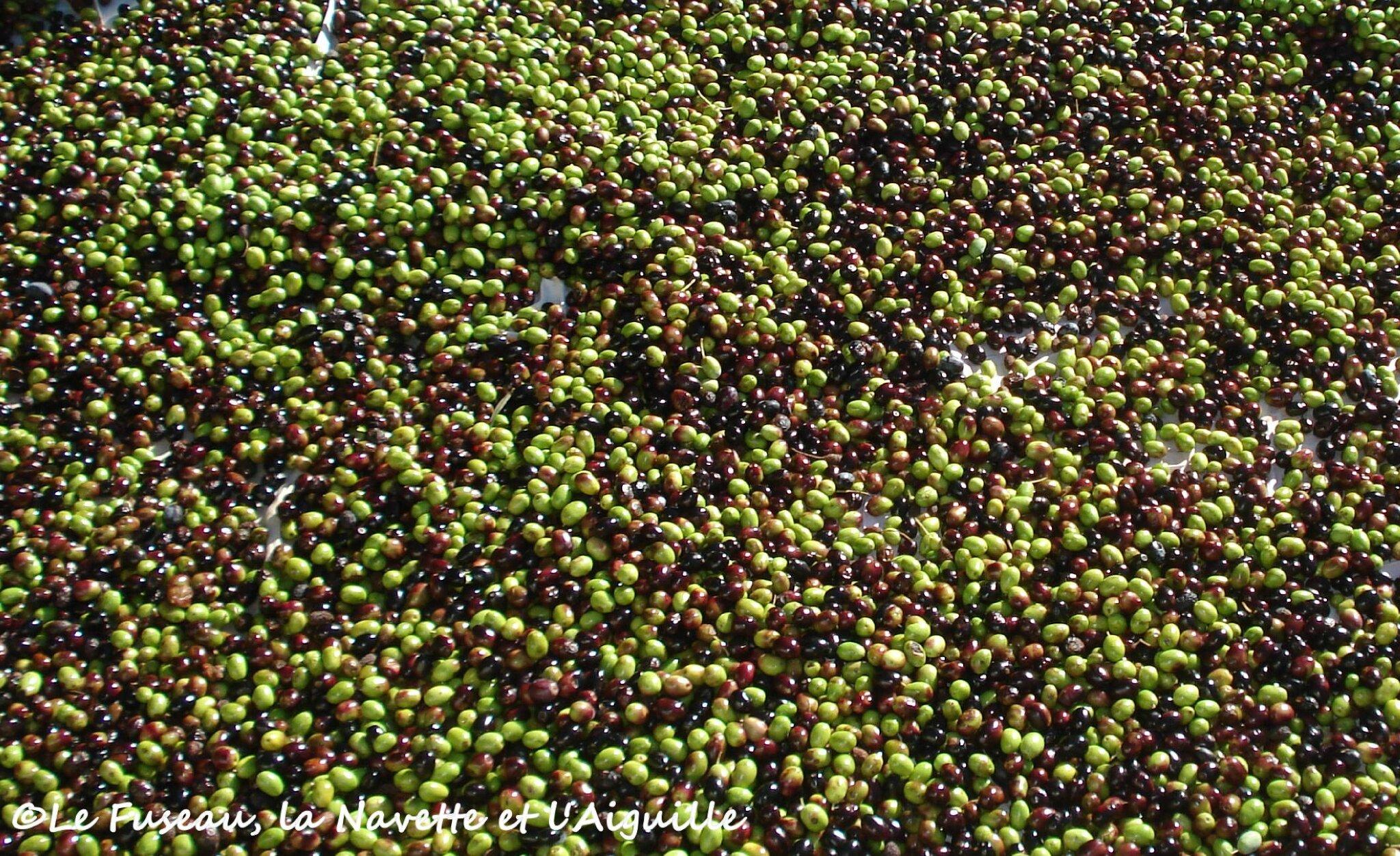 olives nov 2012