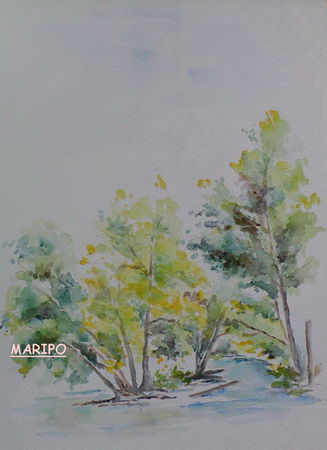 AUDE_SAUVAGE_T