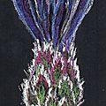 Mon herbier #2 bleuet, le récap'