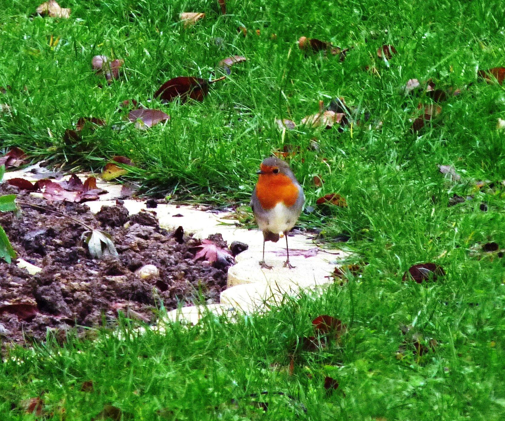Un revenant au jardin sous ma gloriette - Petit insecte rouge jardin besancon ...