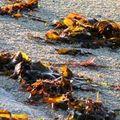 Audio-visuel breton : des internautes se rebiffent