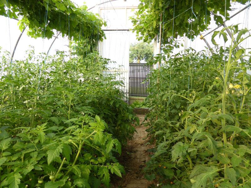 13-tomates (5)