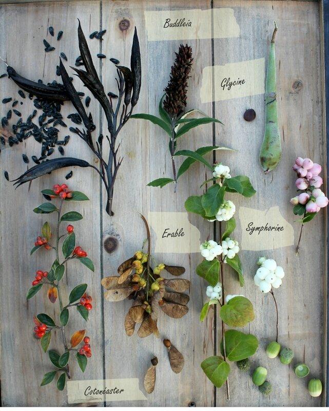 graines du jardin2