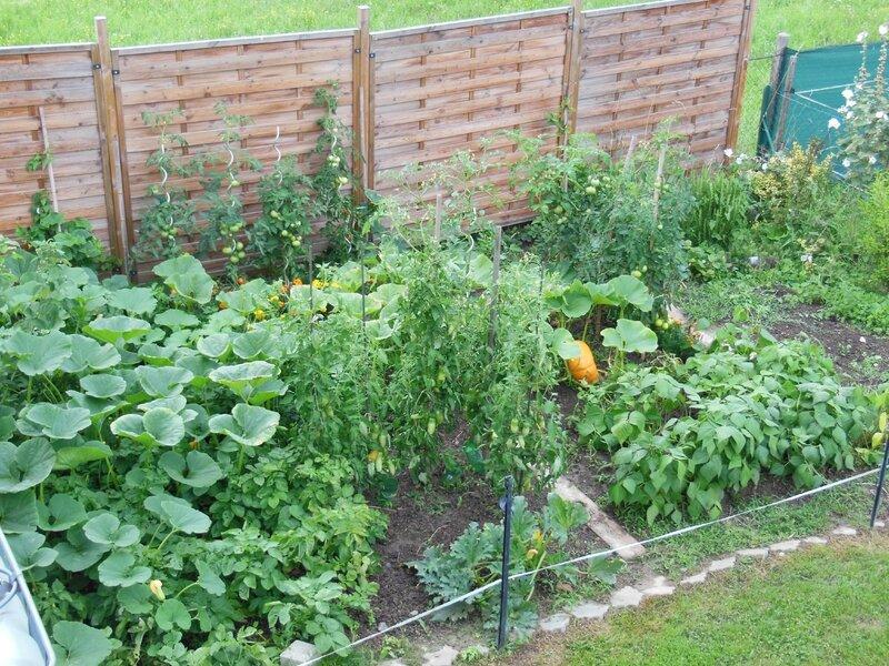 mon jardin : tout a poussé, la récolte promet d'être fructueuse