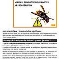 Information : lutter contre le frelon asiatique